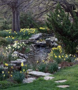 Daylilies and junipers