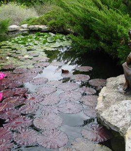 enjoy aquatic plants in the various ponds through botanica gardens