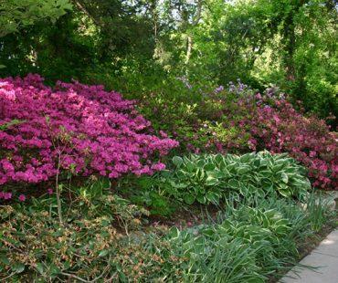 floral woodland